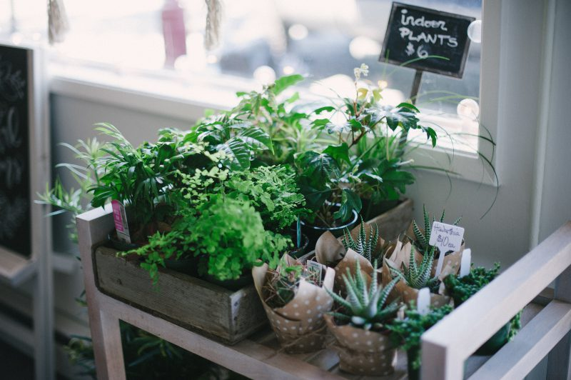 Small plants sold at Confetti Floral in Abbotsford